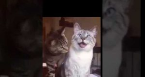 CATS AND DOGS Funny Cat and Dog Vines COMBINATION