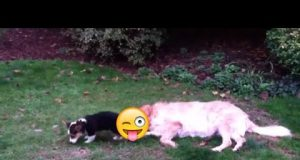 Funniest Dummy Dog's FAILS COMPILATION 2020   TRY NOT LAUGH CHALLENGE  