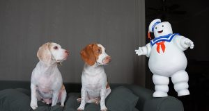 Dogs vs Mini & GIANT Marshmallow Puft Man: Funny Dog & Dancing Marshmallow Man Prank