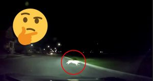 DOG RAN IN FRONT OF CAR! GREATEST CAR CRASHES #6 2020