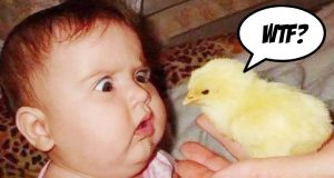 Funny Baby and Baby Animals Fails - Fun and Fails Baby Compilation