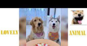 LOVELY ANIMAL, THE BEST FUNNY LOVELY DOG, LOVELY ANIMAL 2020, E P 02