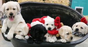 Funny Videos Of Puppies And Dogs - Awesome Funny Pet Animals Life   Baby Dogs Cute And Funny