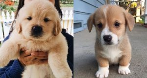 Best Cute Puppies Ever 2019 - Baby Dogs Cute And Funny Dog Videos   Puppies TV