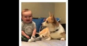 Try Not To Laugh At This Ultimate Funny Dog Video Compilation | Funny Pet Videos-challange dogs