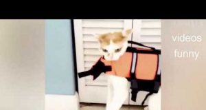 Try Not To Laugh Animals   Funny Cats Videos 2019