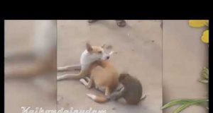 CATS LIFE - Monkey And Dog Funny Video