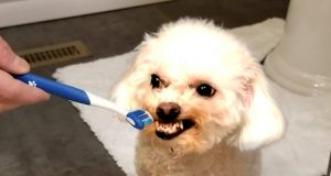 FUNNY DOG VIDEOS TO MAKE YOU LAUGH 😂