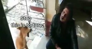 Funny video:- dog still can't tolerate this