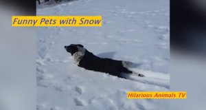 #catsplaying #dogplaying #pets Pets Playing In Snow ! Funny Pet Videos 2020