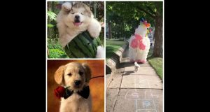 2020 funniest-Cutes dogs and funny dog