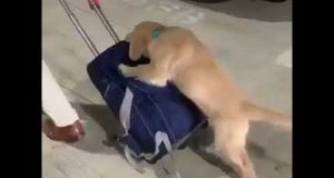 Gyme Help Is Friend Funny Video | Dog Help Him Funny Moment