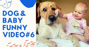 DOG & BABY FUNNY VIDEO #6   Funny Dog and Cat Compilation - Funny Doggies and Moggies