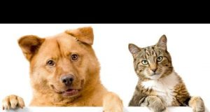 Funniest Dogs and Cats - Awesome Funny Pet Animals Life Videos 2020