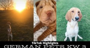 Tik Tok pets funny and cute pets compilation - January 2020 KW3 HD