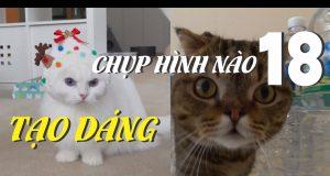 Mèo Con Và Những Nét Đáng Yêu   Yêu Mèo Cute