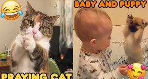 🤣 Funniest Cats 😻 And Dogs 🐶 Cute and Funny Pet Videos Compilation - Cutest Animals Video 2020