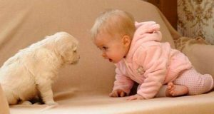 Amazing Friendship between Babies and Pets - Cute babies and dogs