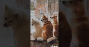 The best funny Dog and Cat, 最も面白い動物 15