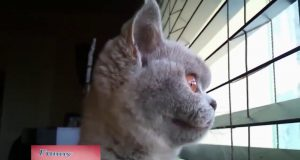 Funny Animals Movie - Try Not To Laugh.Cats Dogs - Compilation. FUNNY PET VIDEOS.