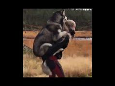Cute and funny Dogs videos compilation / Perros divertidos y tiernos recopilación de videos