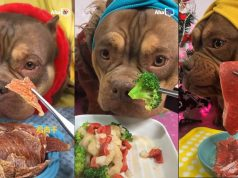 Troll Dog With Food - Funny Animals - Top Cutest Animals 2020 - Aha TV #2