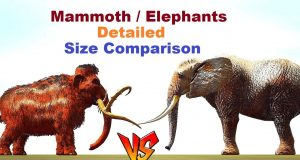 Elephants Mammoths ll Extinct and Living Comparison