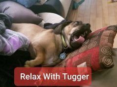 Winter Relaxation Time with Tugger - The Cutest Dog.  Calm, meditate, work, study.  2 hrs!