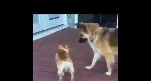 Funny Animals & Pets Compilation   Tiny Cat and Dog