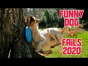 Epic Funny 🐕 Dog 🐕 fails | Funny Fails | | Fail Compilation | Funnyify