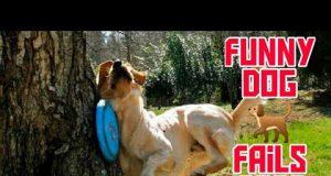 Epic Funny 🐕 Dog 🐕 fails | Funny Fails | | Fail Compilation | Funnyify