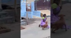 Women and dog funny video. #18