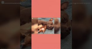 funniest dogs cutest  dogs
