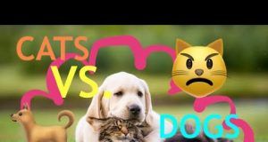 CAT VS DOG COMPILATION | FUNNY PETS