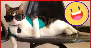 Ridiculous cats fails and funny moments 2020. Epic cats fails and memes compilation