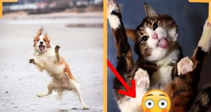 Funny Dog and Cat Video | Dog and Cat Compilation | Funny Animal Vines 2020
