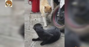 OMG! Dancing Cat 😻 Funny and Cute Cats Compilation - Dog & kitty Videos 2020