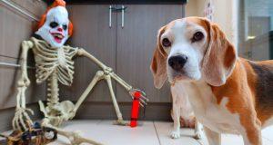 Funny Dog vs Pennywise Killerclown PRANK!