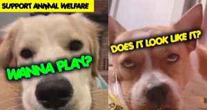 How Interesting It Is To Have A Dog | Watch and Support Animal Welfare