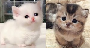 💗 😚 Funny and Cute Animals Compilation 2020 💗 -Funny cat and dog