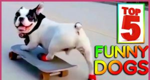 TOP5 BEST FUNNY DOGS