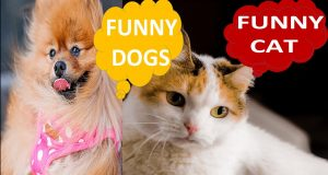 FUNNY CAT AND DOGS cats dogs funny, cats funny dogs ,funny cats and dogs Funny is all about  babies