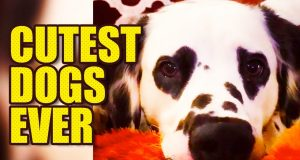 Funniest Dog Snapchats | Cute & Funny Dogs 🐶