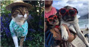 Super FUNNY Cats and Dogs 🔴 Cute Cats and Dogs Videos Compilation (2020) Perros y Gatos Recopilación