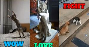 Try Not To Laugh Cute Funny Animals Of The Week🐈 Try Not To Laugh Cutest Pets And Funny Animals2020