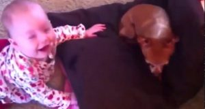 Funny cats , Dogs and babies playing together   Cute Dog; baby compilation Dogs life 2020 Part 1