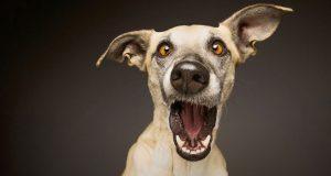 Ten minutes funny videos cat and dog. #4 | Десять минут приколов с котами и собаками #4