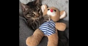 Cats are so funny you will die laughing - Funny cat compilation 2020
