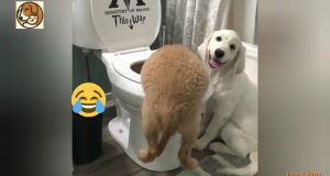 OMG! Skating Dogs - Cute and funny Dogs Compilation 🐶 - Dog & Kitty Videos 2020