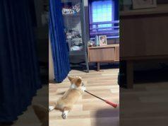 😂When Dogs Watch Demon Slayer